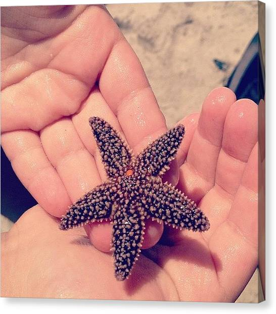 Foxes Canvas Print - 🌟🐠 #starfish #beach #ocean by Rachel Fox Burson