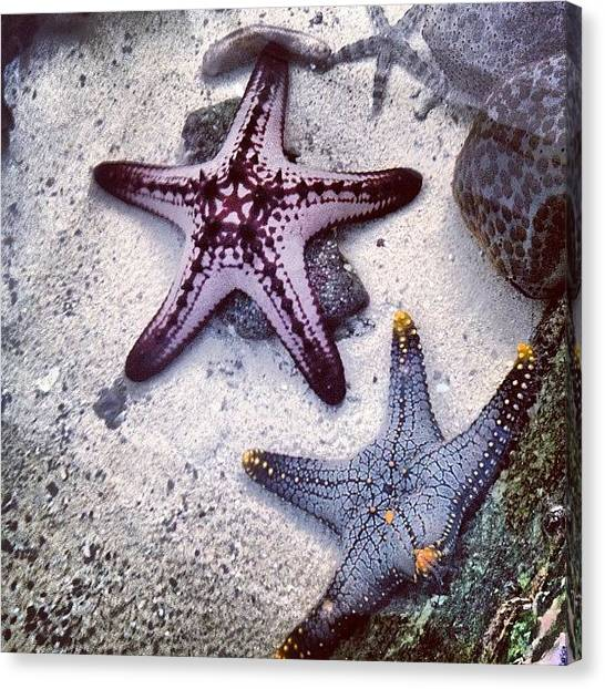 Underwater Canvas Print - 🌟 Starfishes 😁 by Nancy Nancy