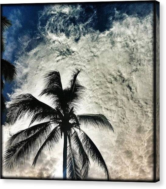 Palm Trees Canvas Print - ... Strange, Strange Weather by Brian Cassey