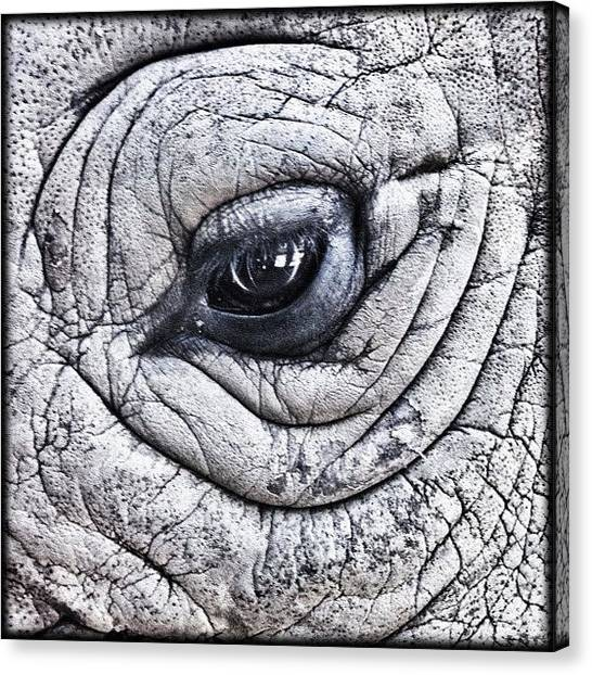 Rhinos Canvas Print - ... Up Close And Personal ... Eyeball by Brian Cassey