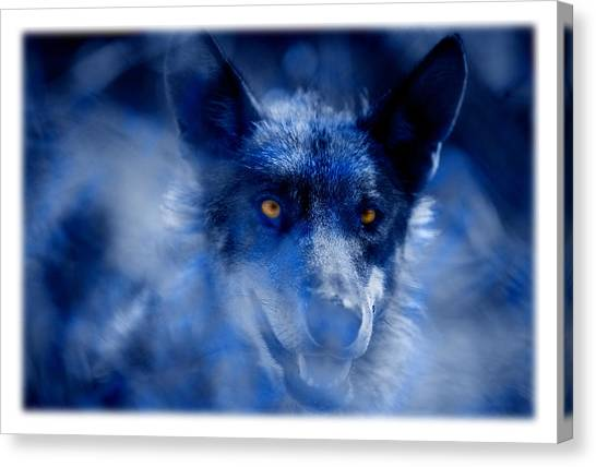 Arctic Wolf Canvas Print -  Wolf by Mal Bray