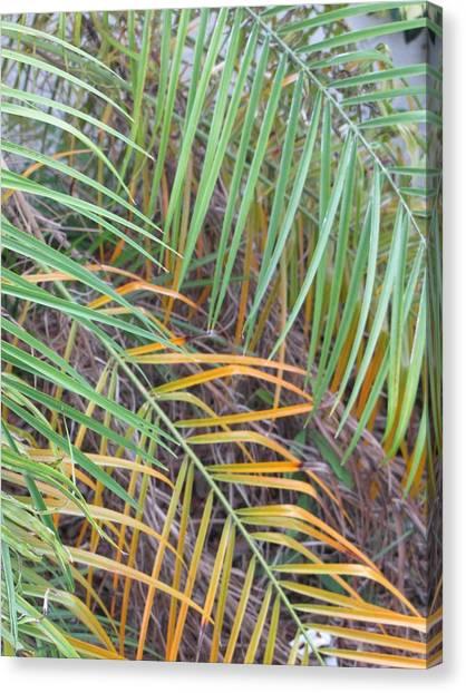 014 Palm Leaves Canvas Print by Carol McKenzie