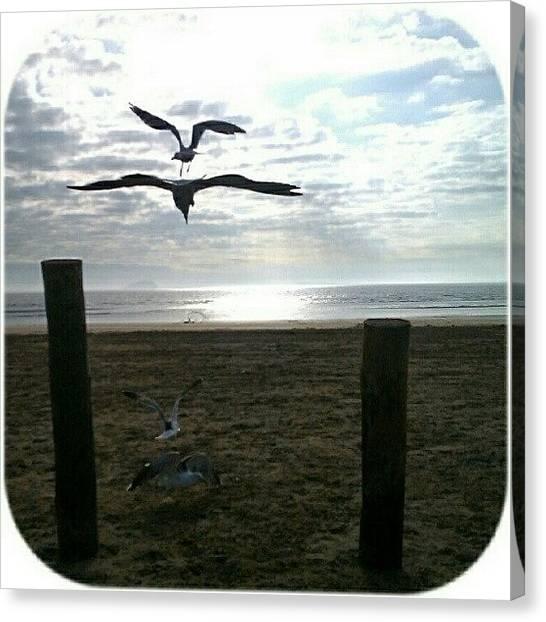 Seagulls Canvas Print - !:0)#nasa #launching #shuttle #gull by Kevin Zoller