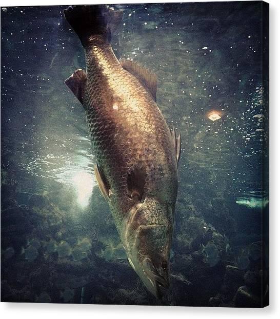 Underwater Canvas Print - 🌊 🐟 😂 by Nancy Nancy