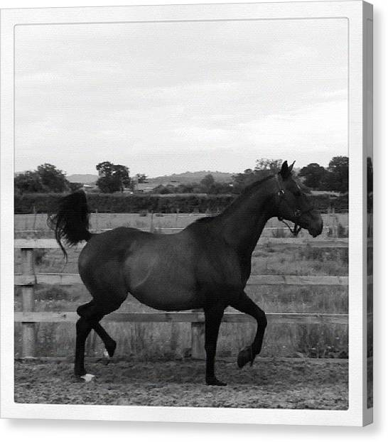 Thoroughbreds Canvas Print - :* Swift #horses #horse #ponies #swift by Caitlin Hay