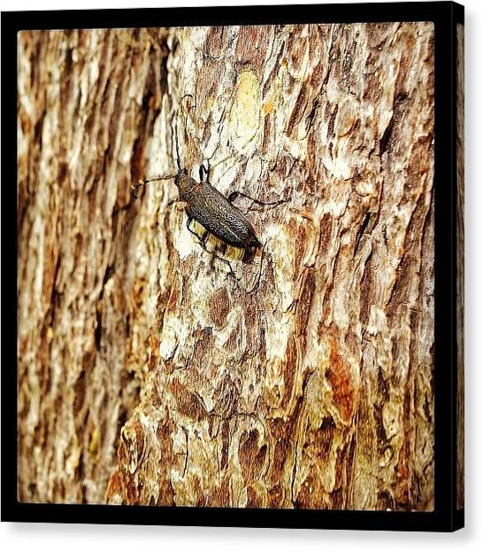 Tetons Canvas Print - A Friendly Sawyer Beetle At Jenny Lake by Chris Bechard