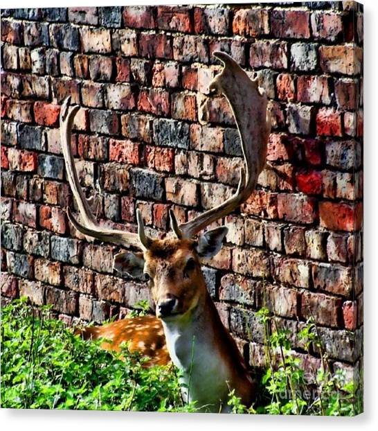 Large Mammals Canvas Print - Against The Wall by Isabella Shores