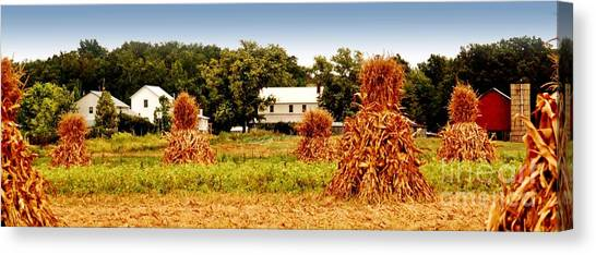 Amish Corn Harvest Canvas Print by Russell Ford
