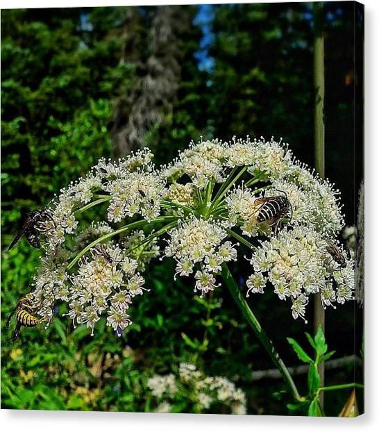 Tetons Canvas Print - Another Busy Work Day For Bees by Chris Bechard