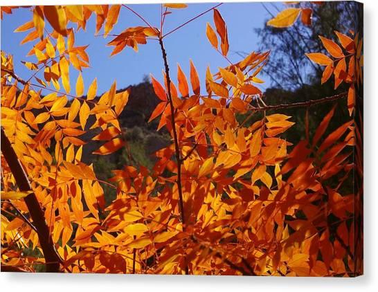 Arizona Fall Canvas Print