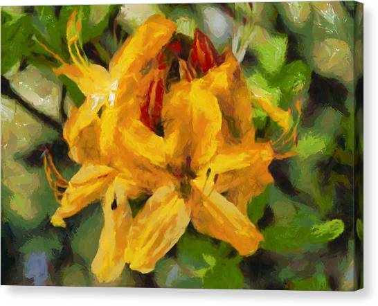 Azaleas In Bloom Canvas Print