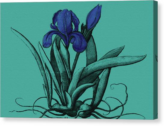 Canvas Print - Beautiful Iris by Evelyn Patrick