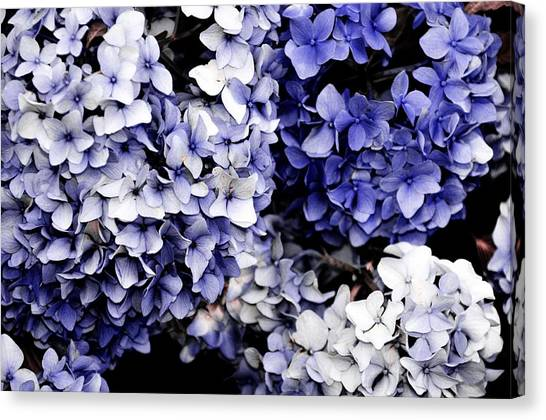 Blue Bloom Cluster  Canvas Print by JAMART Photography