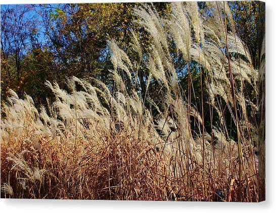 Blowing In The Wind Canvas Print by Bruce Bley