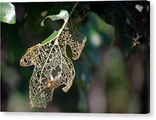 Bokeh Of Leaf Canvas Print