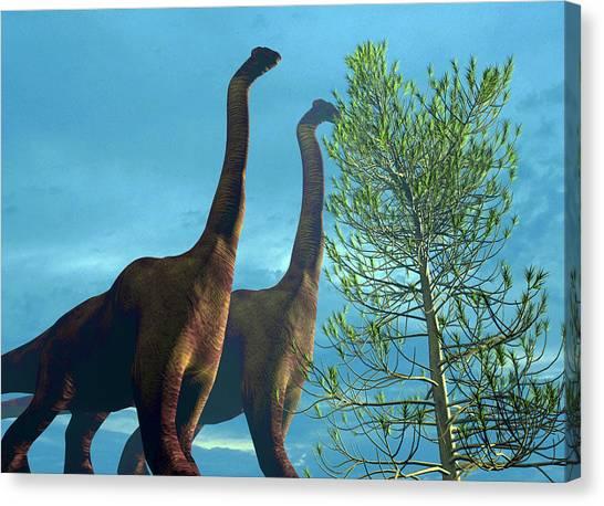 Brachiosaurus Canvas Print - Brachiosaurus Dinosaurs by Christian Darkin