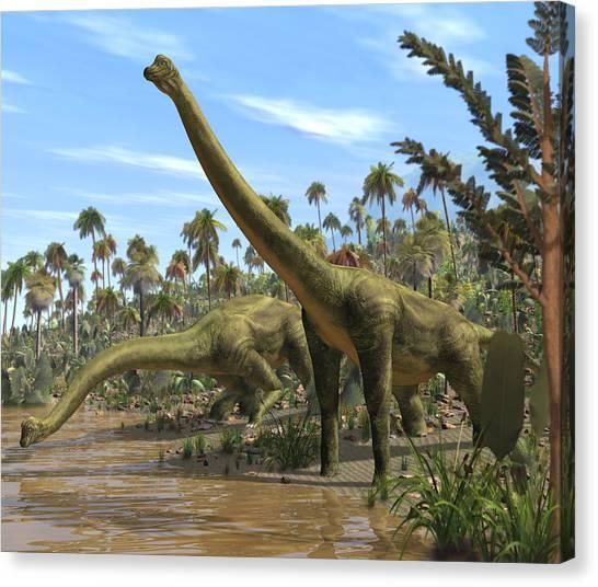 Brachiosaurus Canvas Print - Brachiosaurus Dinosaurs by Roger Harris