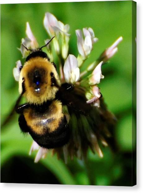 Busy Bee Canvas Print by Terri Albertson