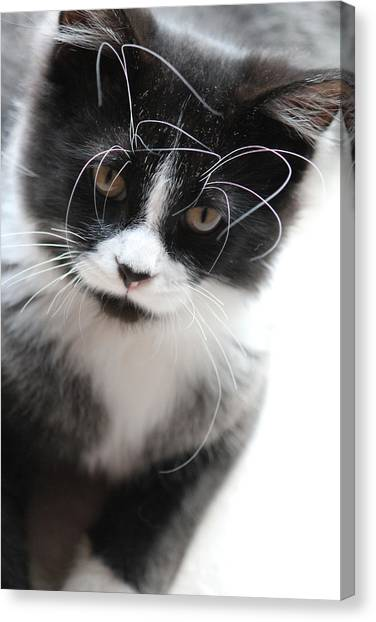 Cat In Chaotic Thought Canvas Print