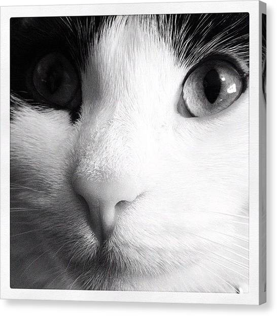 Head Canvas Print - Cat Portrait  by Rachel Williams