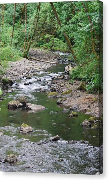 Cedar Creek Canvas Print