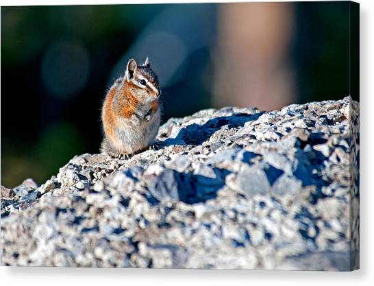 Chipmunk Canvas Print by Elijah Weber