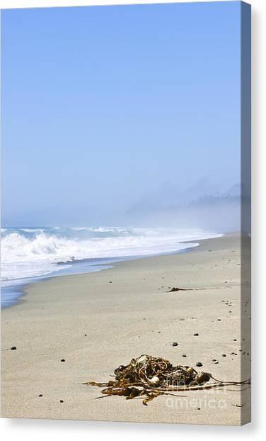 Vancouver Island Canvas Print - Coast Of Pacific Ocean In Canada by Elena Elisseeva