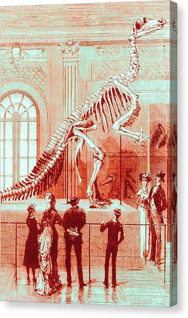 Coloured Engraving Of An Iguanodon Museum Exhibit Canvas Print by Mehau Kulyk