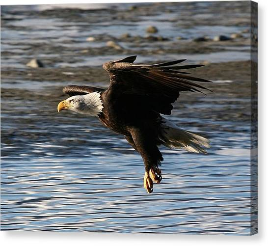 Coming In For The Landing Canvas Print by Carrie OBrien Sibley
