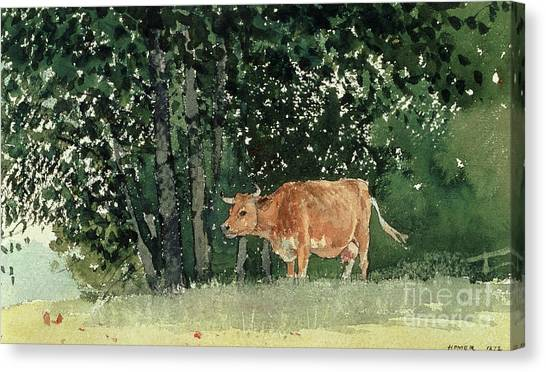 Pencil On Canvas Print - Cow In Pasture by Winslow Homer