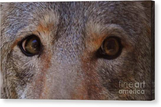 Coyote Eyes Canvas Print by DiDi Higginbotham
