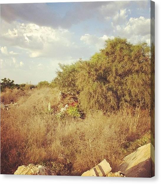 Dove Canvas Print - Cyprus,ayia Napa #cyprus #ayia_napa by Grigorii Arzhanykh