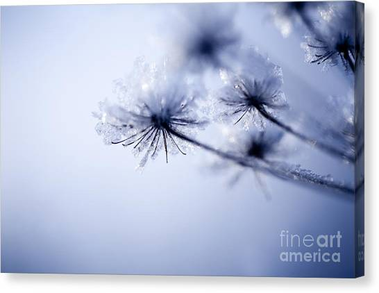 Icy Leaves Canvas Print - Detail Of Frozen Flower by Kati Finell