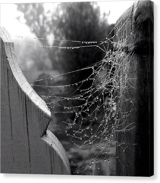 Spiders Canvas Print - Dew On A Web by Kim Gourlay