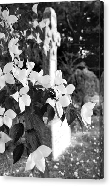 Dogwood In Cemetery Canvas Print