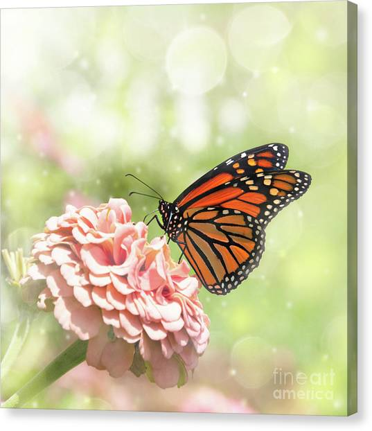 Dreamy Monarch Butterfly Canvas Print