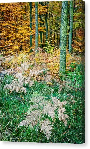 Fall Scenery Canvas Print by Maciej Markiewicz