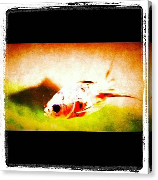 Underwater Canvas Print - Fish by Giuseppe Anello