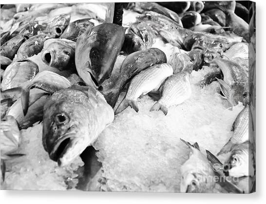 Fish On Ice Canvas Print