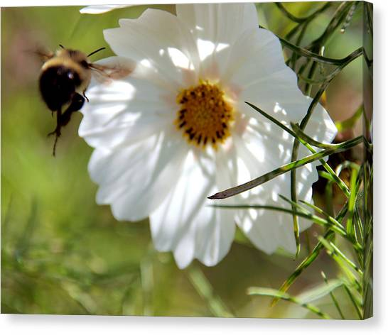 Flower And Bee Canvas Print by Christy Woods