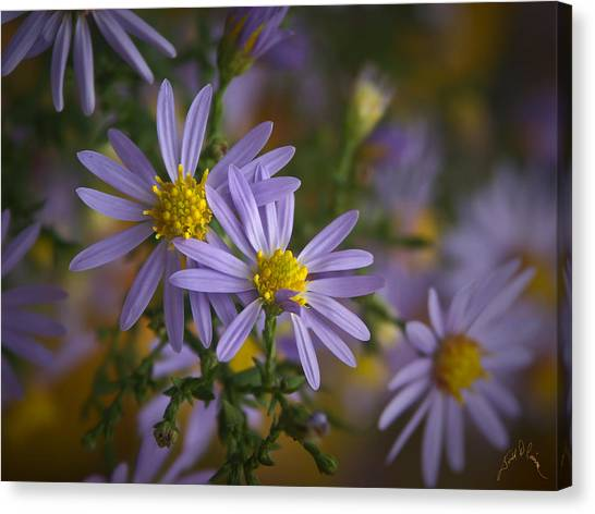 Flowers On Blue Ridge Parkway Canvas Print by Williams-Cairns Photography LLC