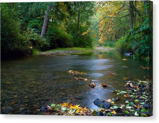 Fly Fisherman's Dilemma  Canvas Print by Clifford Crawford
