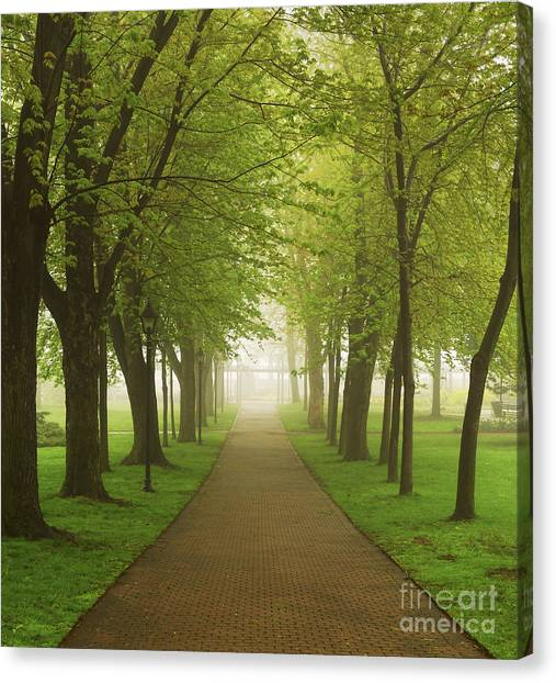 Forest Paths Canvas Print - Foggy Park by Elena Elisseeva