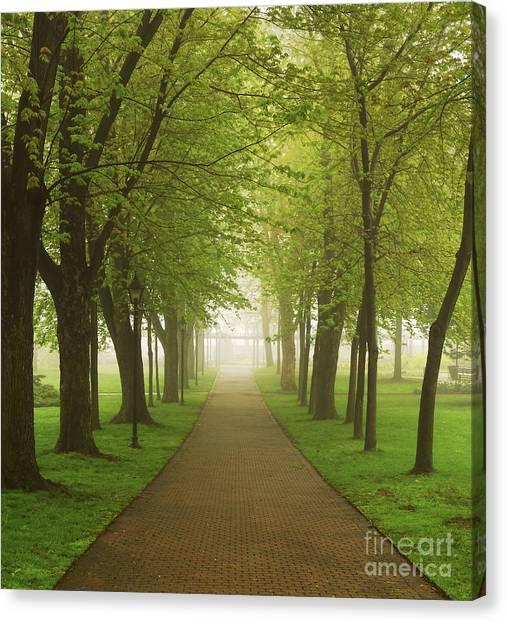 Path Canvas Print - Foggy Park by Elena Elisseeva