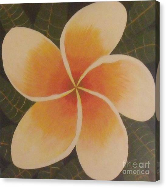 Frangipani Canvas Print by Debra Piro
