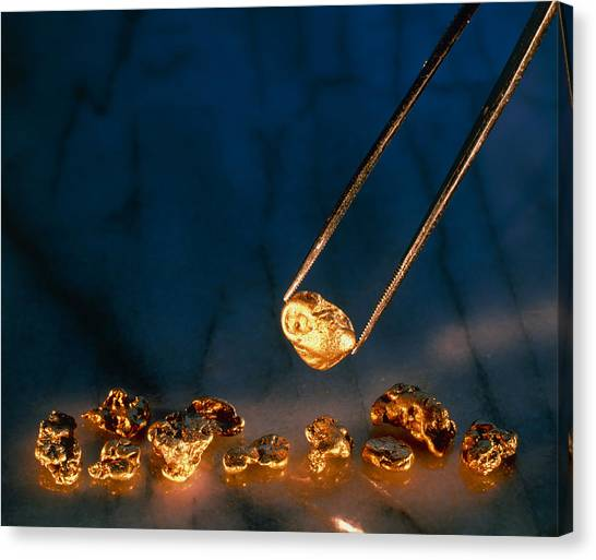 Gold Nugget Canvas Print - Gold Nugget Held In Twizzers by David Nunuk