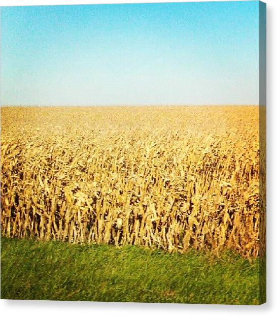 Harvest Canvas Print - Golden Harvest by Nicole Plows