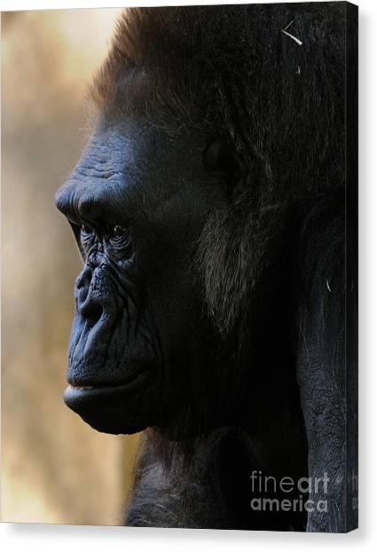 Gorilla Canvas Print by Marc Bittan