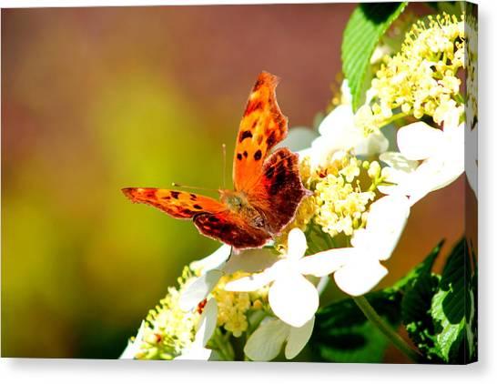 Graceful Butterfly Canvas Print by Jose Lopez