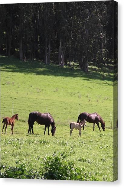 Grace's Horses Canvas Print